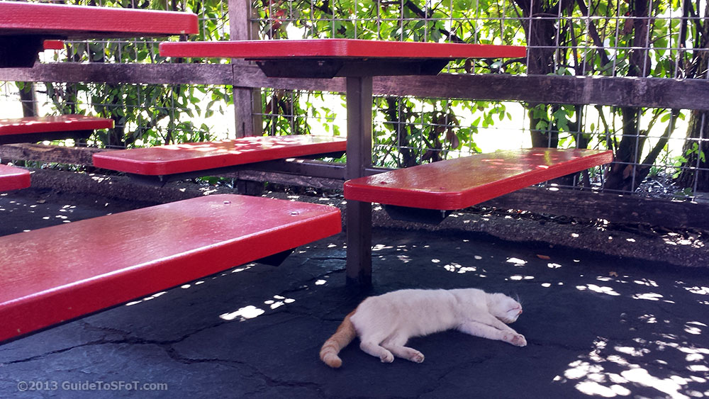 Wild cat napping at Six Flags over Texas